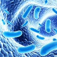 bacteria-colony-192x192